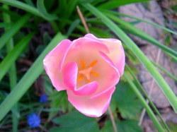 4-30花.jpg