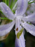 庭花12.jpg