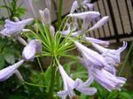 庭花3.jpg