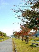 川-紅葉4.jpg