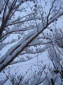 大雪3.jpg