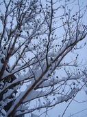 大雪4.jpg